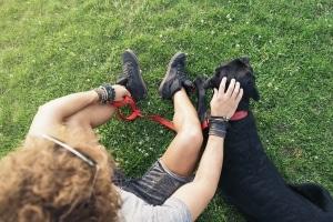 Wenn sich Ihr Hund losreißt und angefahren wird, kann Fahrerflucht als Tatbestand vorliegen.