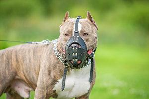 Vom Hund gebissen: Das Schmerzensgeld muss der Halter zahlen.