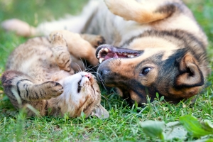 Katze oder Hund überfahren: Droht wegen Fahrerflucht möglicherweise eine Anzeige?