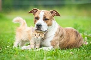 Auch Tiere können von Sachbeschädigung betroffen sein.