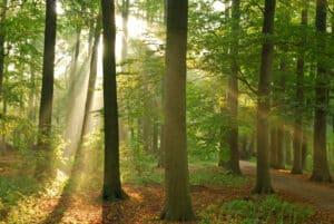 Wildunfälle in Deutschland gehen zurück